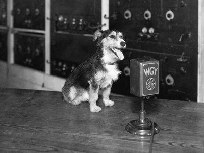 dog_at_wgy_radio_microphone